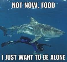 sad shark is shark new meme tomorrow in 9