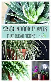inside house plants indoor plants that clear toxins indoor plants low light australia