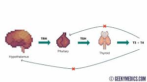Thyroid Chart Thyroid Function Test Interpretation Tft Interpretation