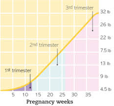 Pregnancy Weight Gain Month By Month Chart Pin On Pregnancy