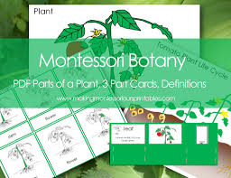 Montessori Geography Charts Montessori Botany Parts Of A Plant Charts 3 Part Cards Labels Life Cycle Charts Definition Cards Tomato Life Cycle Charts Labels