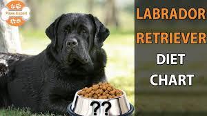 Pet Food Chart Labrador Retriever Diet Chart In Telugu