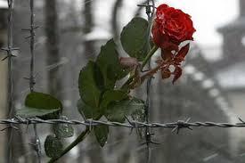 """Результат пошуку зображень за запитом """"картинки пам'яті жертв Голокосту"""""""