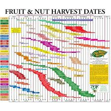 Blueberry Ripening Chart Fruit Tree Harvest Chart Groworganic Com