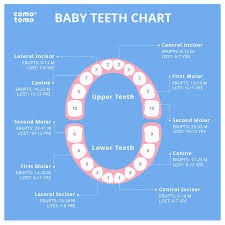 Teething Chart Babies Is Teething The Culprit For Your Babys Sleep Problems Heres How