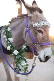 burro genius best images about events s donkeys and infinite  17 best images about events s donkeys and beer burro perfect addition to a barn wedding