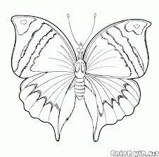 Disegni Da Colorare Primavera Farfalla