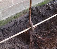How To Choose An Apple Tree For Planting  Harvest To TableWhen Do You Plant Fruit Trees