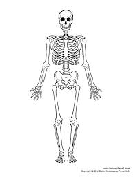 Human body anatomy diagrams collection human body anatomy diagrams rh jeux fille biz