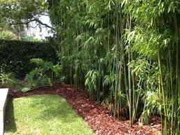 Small Picture Landscape Design Bamboo Irrigation Design BLG Environmental