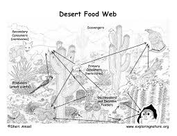 Food Chain Coloring Page The Best Coloring Pages
