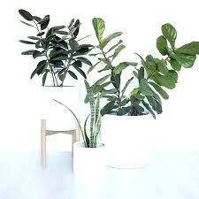 tall indoor plant pots tall plant pots for indoor plants tall indoor plants large plant white tall indoor plant