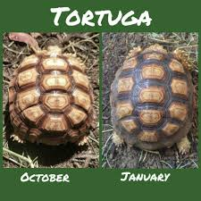 Tortugas Growth From October 2017 To January 2018