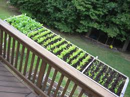 box gardens. patio vegetable planters inspirational of cool container ve able gardens university maryland extension box o