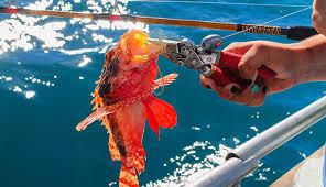 10 Best <b>Fishing Pliers</b> in 2019 [Buying Guide] Reviews - Globo Surf