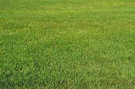 Tall Grass Seamless Texture Tall Grass Seamless Texture N Nongzico