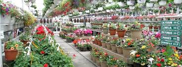 costco garden centre plants flowers garden supplies at the greenery garden for garden centre costco garden