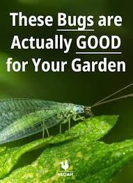 good bugs