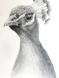 Sketches Animal Pencil Sketches Of Animals At Paintingvalley Com Explore