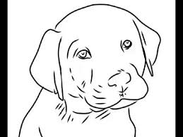 Small Picture How to Draw Cute labrador puppy Easy Drawings YouTube