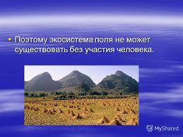 Презентация на тему Экосистема поля Поле это экосистема  6 Поэтому экосистема поля не может существовать без участия человека Поэтому экосистема поля не может существовать без участия человека