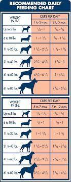 Simply Nourish Large Breed Puppy Food Feeding Chart 17 Best Large Breed Dog Clothes Images Dogs Big Dogs