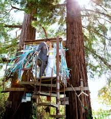 Wedding Photo In Tree House