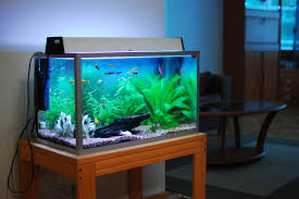Fish Tank How To Move Fish Tanks Your Local Movers