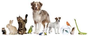 Companion Animal Option Animal Science
