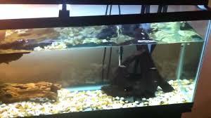 Turtle Tank Decor My 55 Gallon Turtle Tank Youtube