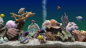 Fish Tank Wallpaper 34 Image Collections Of Wallpapers