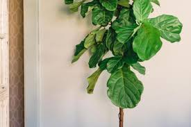 plant : 3 Indoor Plants You Probably Cant Kill Beautiful Indoor ...