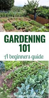 gardening 101 how to plant a garden
