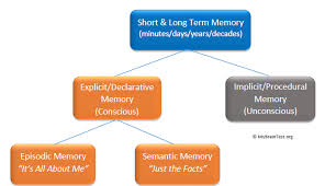 Long Term Memory Chart Short Term Memory And Long Term Memory Memoryhealthcheck