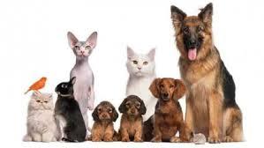 Картинки по запросу домашні тварини