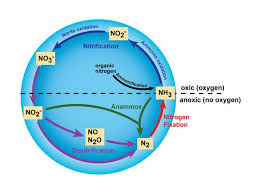 The Nitrogen Cycle And Its Processes Earth Eclipse