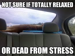 Not sure if totally relaxed Or dead from stress - Travel Cat ... via Relatably.com