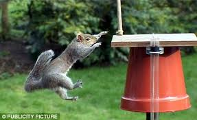 how to keep birds away from garden. Squirrel How To Keep Birds Away From Garden E
