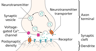 the ultimate guide to neurotransmitters for ap psychology neurotransmitters ap psychology