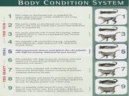 Nestle Purina Cat Body Condition Chart Misc Pictures