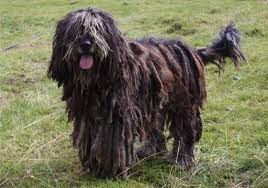 9 Dogs So Weird Looking You ve Gotta Love Them Rover
