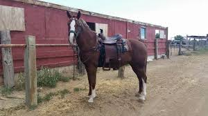 Dream Catchers Equine Rescue Dreamcatchers Equine Rescue Llc nonprofit in Fountain CO 1