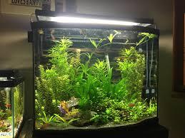 plantedtank