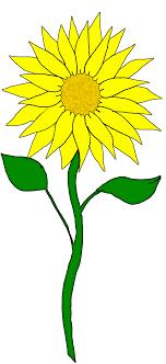 sunflower free sunflower clip art free clipart images