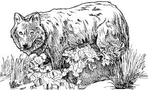 Get Wolf Coloring Pages For Kids Background