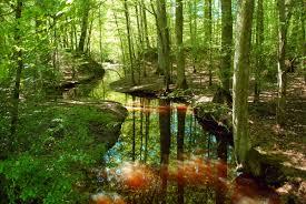 """Résultat de recherche d'images pour """"image forêt"""""""