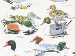 Bird Taxonomy Chart Bird Charts And Posters Bird Spot