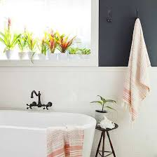 Why Grow Plants in the Bathroom?