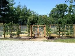 vegetable garden fence ideas breathtaking vegetable garden fence ideas from wire netting and wooden framed also vegetable garden fence