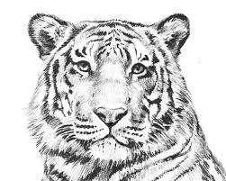 Small Picture Coloring Pages Tiger Coloring Pages Coloring Pages Pinterest